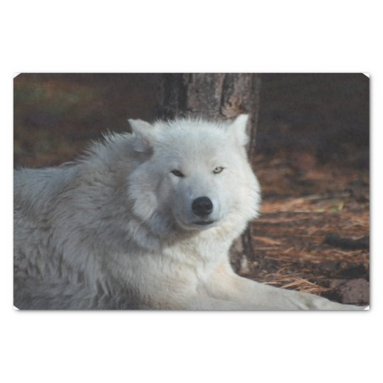 Adorable Arctic Wolf Tissue Paper