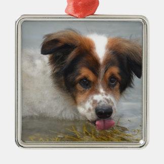 Adorable Australian Shepherd Silver-Colored Square Ornament