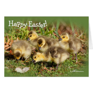 Adorable Baby Canada Geese on the Grass Card