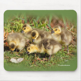 Adorable Baby Canada Geese on the Grass Mouse Pad