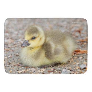 Adorable Baby Canada Goose on the Gravel Bathroom Mat