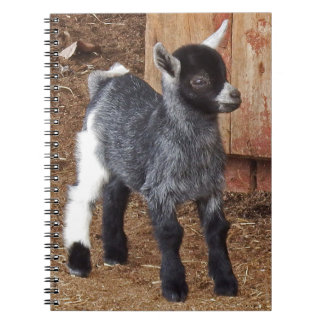 Adorable Baby Goat Notebook