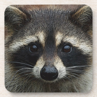 Adorable Baby Raccoon Face Mask Stare Coaster
