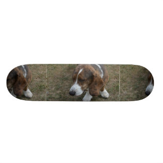 Adorable Basset Hound Skate Board