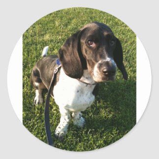 Adorable Basset Hound Snoopy Classic Round Sticker