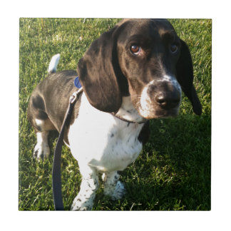 Adorable Basset Hound Snoopy Tile