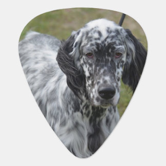Adorable Black and White English Setter Guitar Pick