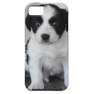 Adorable Black and White Puppy iPhone 5 Case