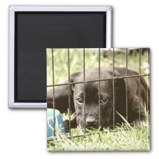 Adorable Black Puppy  Magnet