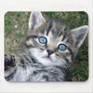 Adorable Blue-Eyed Silver Tabby Kitten Mousepad