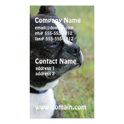 Adorable Boston Terrier Business Card