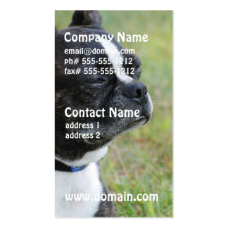 Adorable Boston Terrier Pack Of Standard Business Cards