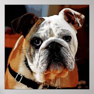 Adorable Bulldog Face Poster