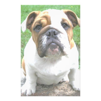adorable bulldog puppy stationery