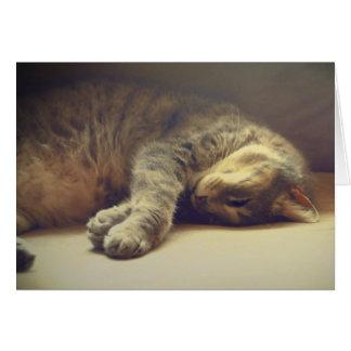 Adorable Cat Card