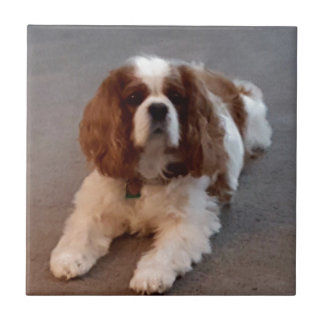 Adorable Cavalier King Charles Spaniel Ceramic Tile