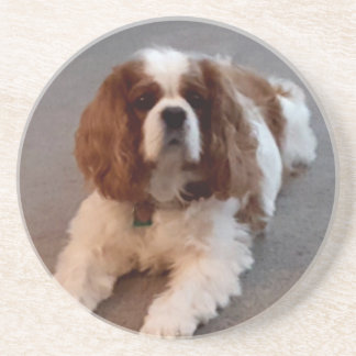 Adorable Cavalier King Charles Spaniel Coaster