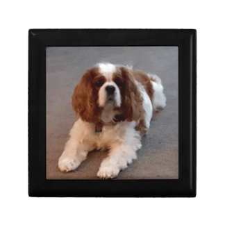 Adorable Cavalier King Charles Spaniel Gift Box