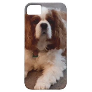 Adorable Cavalier King Charles Spaniel iPhone 5 Case