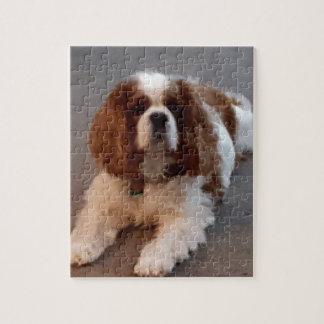 Adorable Cavalier King Charles Spaniel Jigsaw Puzzle