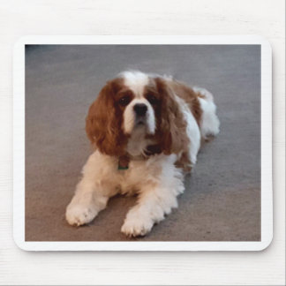 Adorable Cavalier King Charles Spaniel Mouse Pad