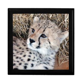 Adorable Cheetah Cub Photo Trinket Box