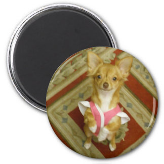 adorable chi 2 inch round magnet