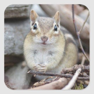 Adorable Chipmunk Smiling Square Sticker
