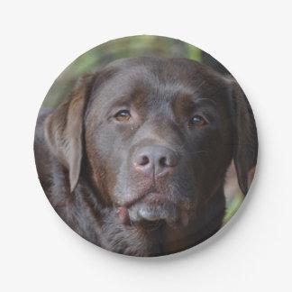 Adorable Chocolate Labrador Retriever Paper Plate