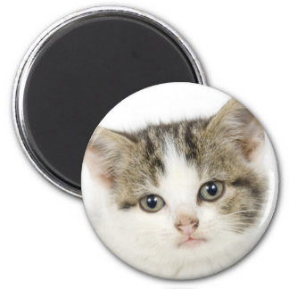 Adorable, cute cat / kitten 2 inch round magnet