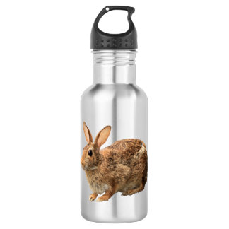 Adorable Cute Cuddly Cottontail Wild Bunny Rabbit