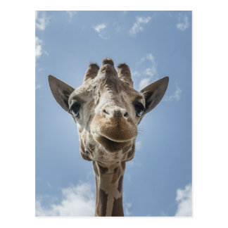 Adorable & Cute Giraffe Head Gift Product Postcard