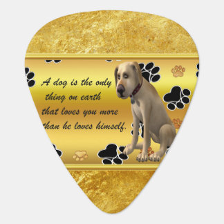 Adorable dog sitting with a cute fun quote guitar pick