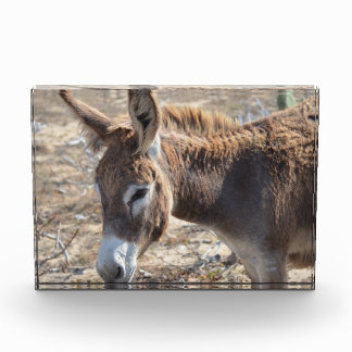 Adorable Donkey