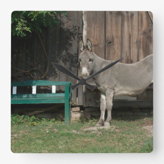 Adorable Donkey Next To Wooden Green Bench Clock