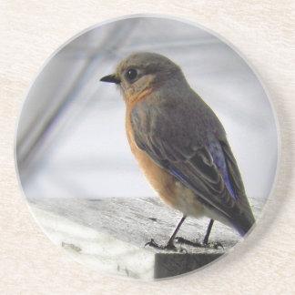 Adorable Female Bluebird Coaster