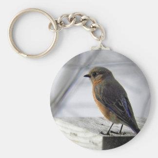 Adorable Female Bluebird Keychains