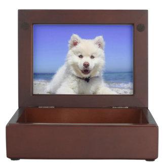 Adorable Finnish Lapphund at the beach Keepsake Box