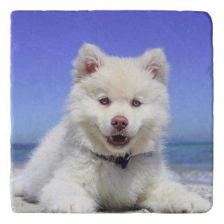 Adorable Finnish Lapphund at the beach Trivet