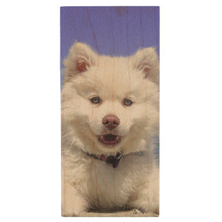 Adorable Finnish Lapphund at the beach Wood USB Flash Drive