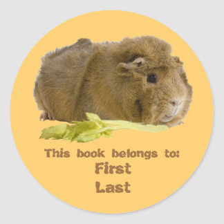 Adorable Guinea Pig Eating Celery Photography Classic Round Sticker