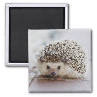 Adorable hedgehog magnet