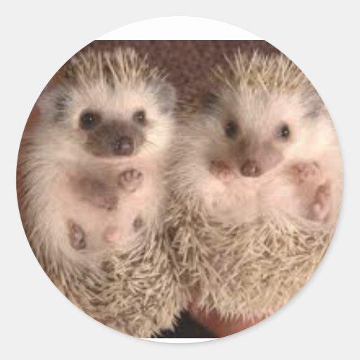 Adorable Hedgehog Pair Sticker
