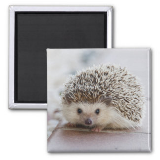Adorable hedgehog square magnet