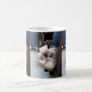 Adorable Himalayan Persian Cat Coffee Mug