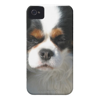 Adorable King Charles Spaniel Case-Mate iPhone 4 Case