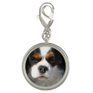 Adorable King Charles Spaniel Charm