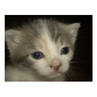 Adorable Kitten Face Postcard