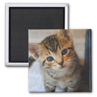 Adorable Kitten Magnet