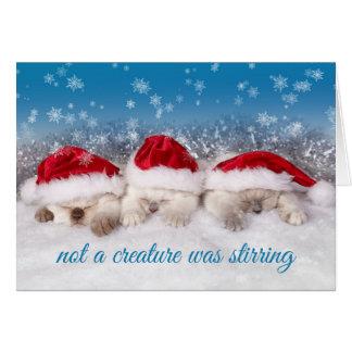 Adorable Kittens in Santa Hats Sleeping Card